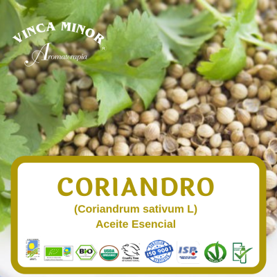 Coriandro semilla (Coriandrum sativum L)