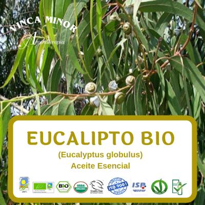 Eucalipto Bio (Eucalyptus globulus)