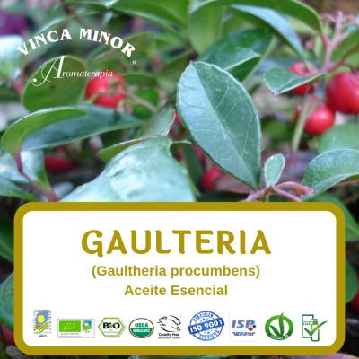 Gaultheria (Gaultheria procumbens)