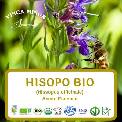 Hisopo Bio (Hissopus officinale)