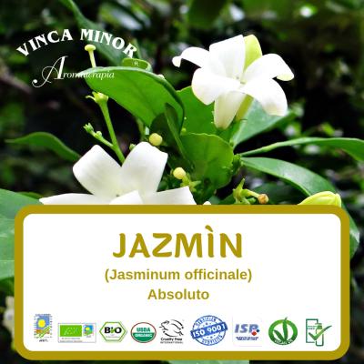 Jazmín Absoluto (RCO, Jasminum officinale)