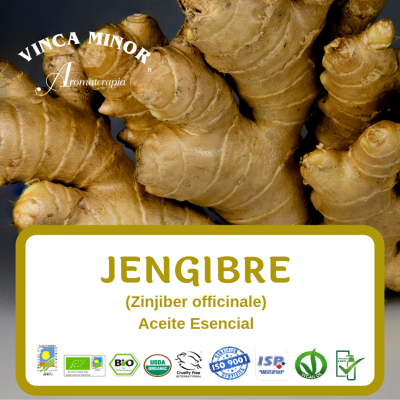 Jengibre (Zinjiber officinale)