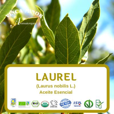 Laurel (Laurus nobilis L.)