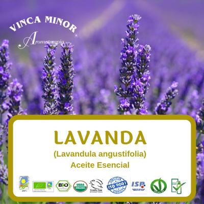 Lavanda (Lavandula angustifolia)