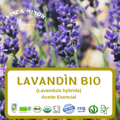 Lavandín Bio (Lavandula hybrida)