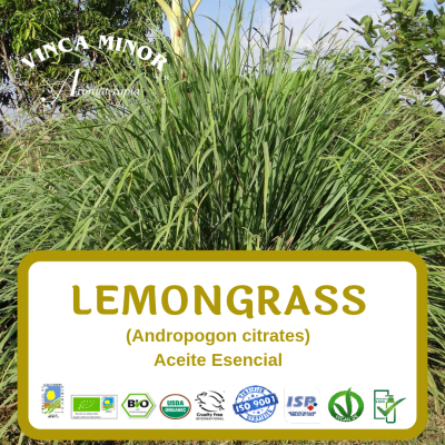 Lemongrass (Andropogon citrates oil)