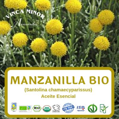 Manzanilla (Santolina chamaecyparissus)