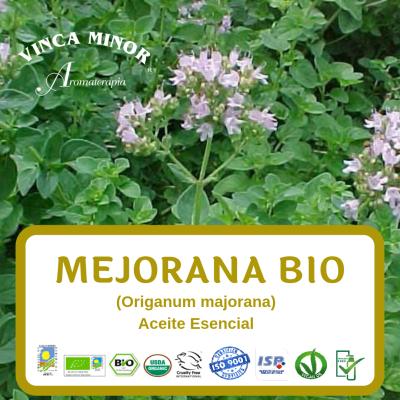 Mejorana Bio (Origanum majorana)