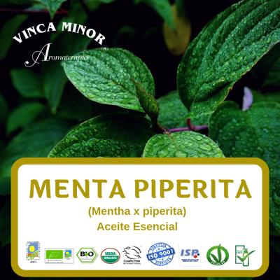 Menta Piperita (Mentha x piperita)