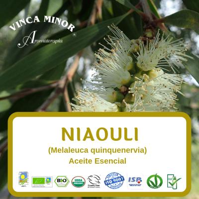 Niaouli (Melaleuca quinquenervia leaf)