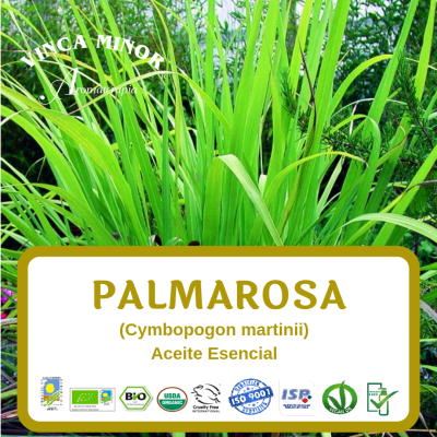 Palmarosa (Cymbopogon martinii oil)