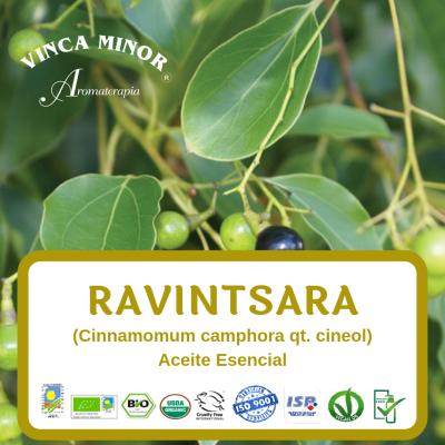 Ravintsara (Cinnamomum camphora)