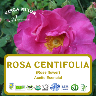 Rosa Centifolia (RCO, Rose flower oil)