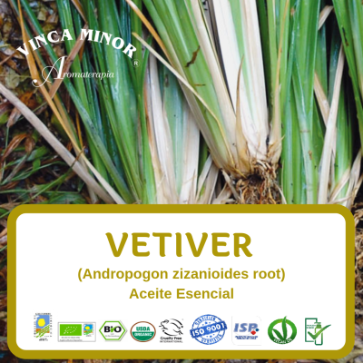 Vetiver (Andropogon zizanioides root oil)