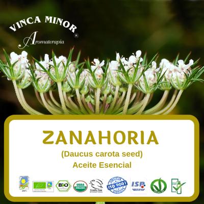 Zanahoria semilla (Daucus carota)