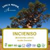 Incienso Oleorresina (RCO, Boswellia carterii)