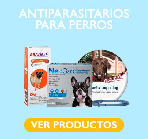 clinicos perro