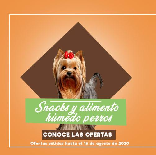 snack y alimentos humedos perro