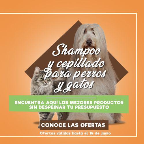 especial shampoo y cepillos