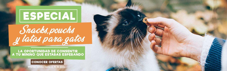 especial snack latas y pouch gatos